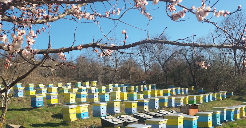beehives on a hill in Bulgaria